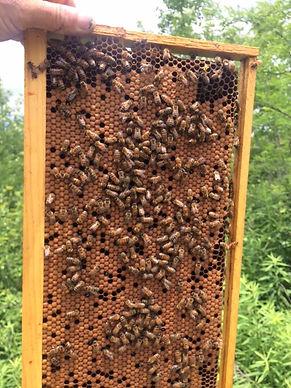 Combs Bee Farm