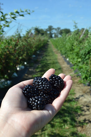 The Berry Farm
