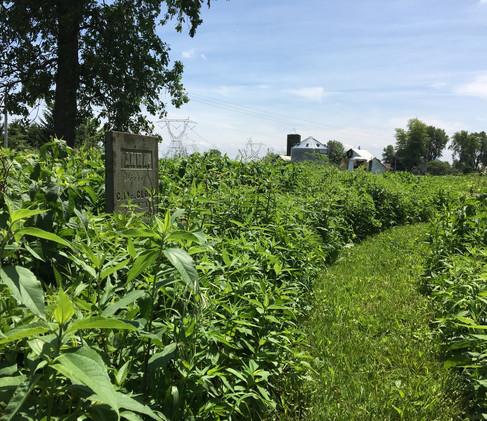 bigelow-cemeteryjpg
