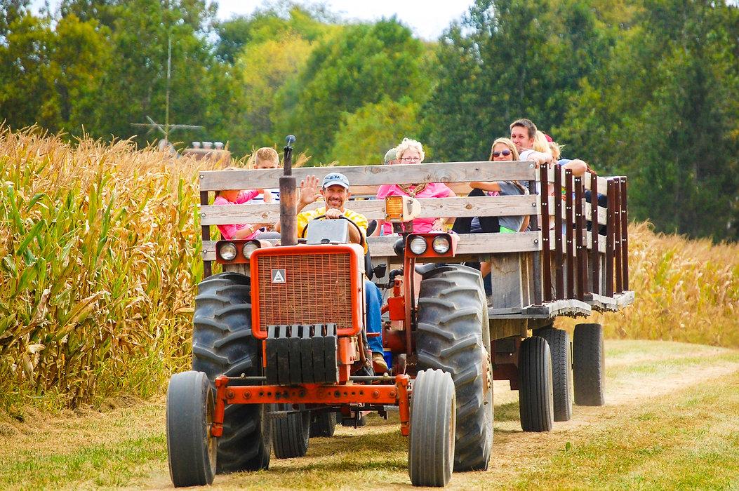 hay ride maize.jpg