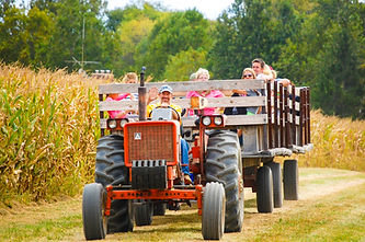 hay ride maize.jpg