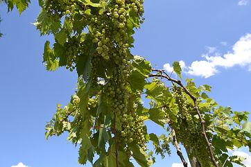 Bokes Creek Winery00032.jpg
