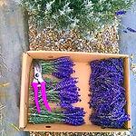 purpleplainsfarm.jpg
