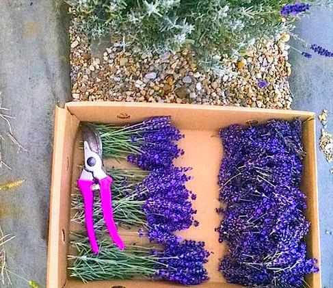 purpleplainsfarmjpg