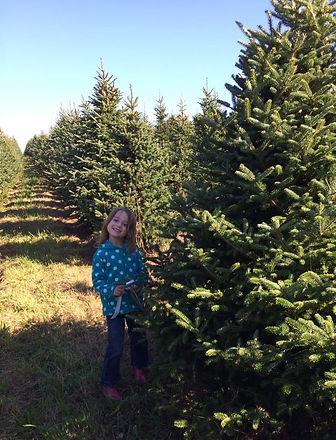 Rush's Tree Farm