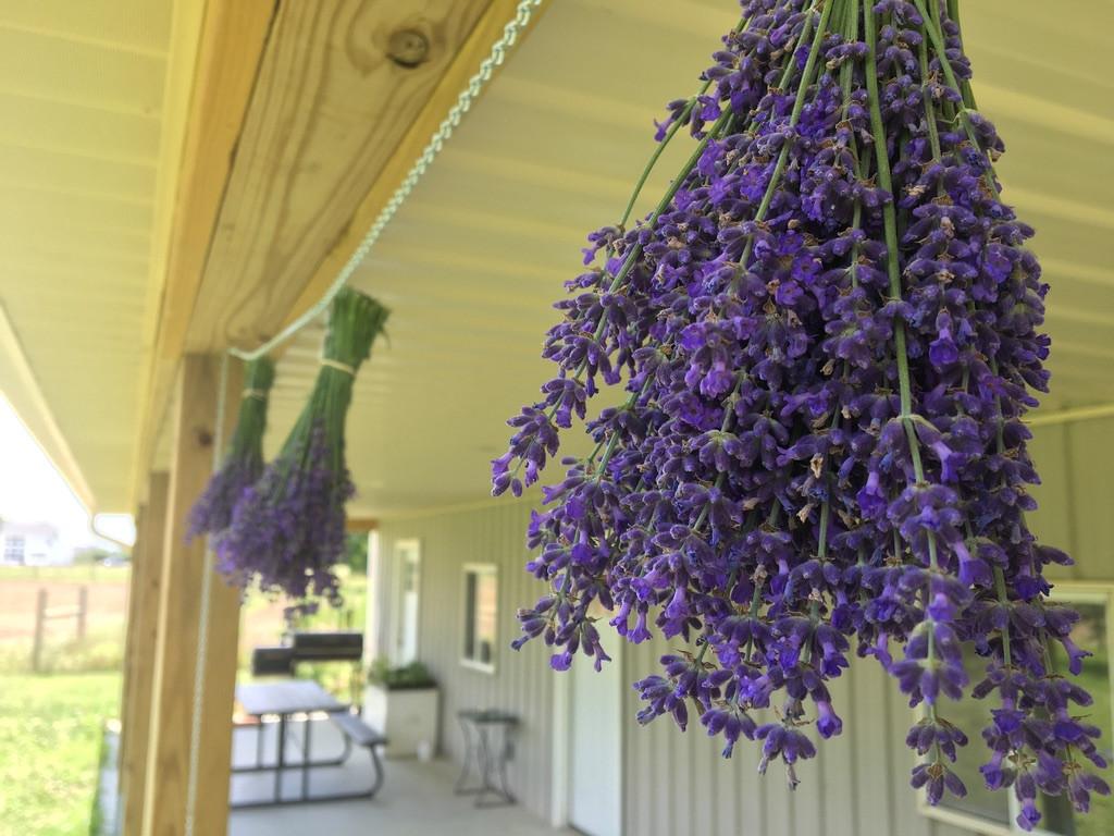 Purple Plains Farm
