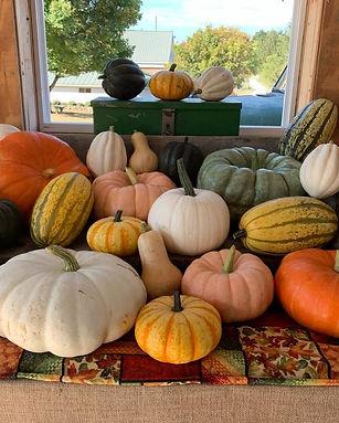 Leeds Pumpkin farm00012.jpg