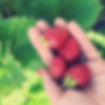 final strawberries.jpg