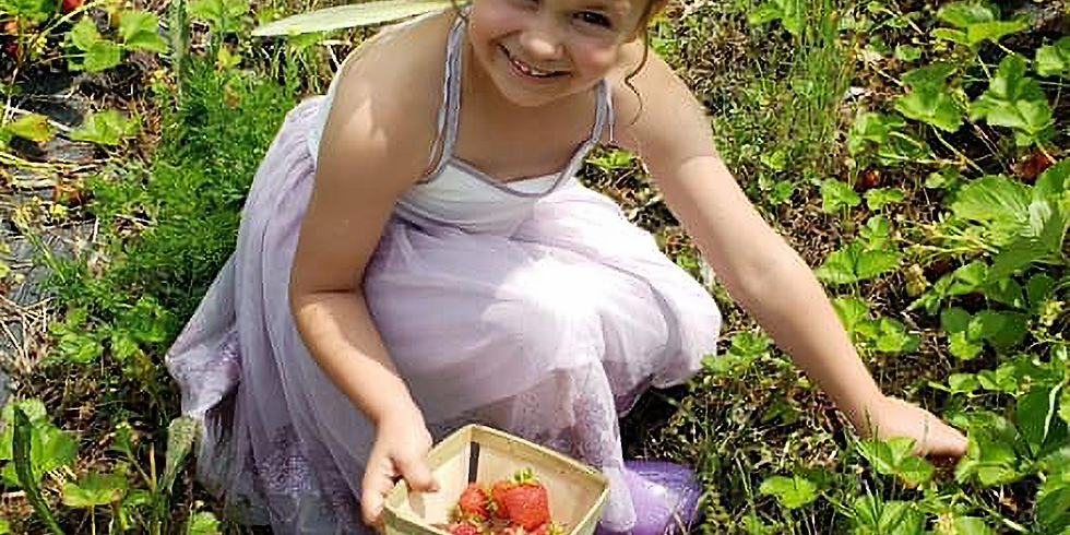 RaspBerry Fairy Tea Party