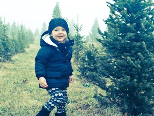 Christmas Tree Farms in Marysville, Ohio