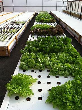 Fresh Harvest Farm