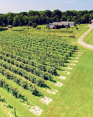 Bokes Creek winery00001.jpg