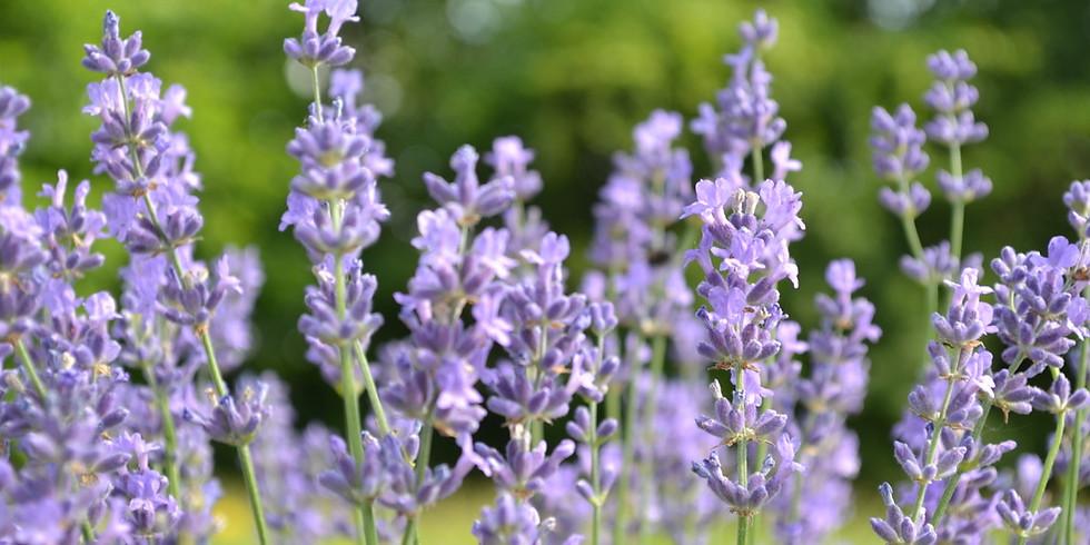 Lavender Open House