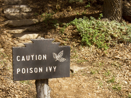 How to Spot Poison Ivy – And What to Do if Dad is Affected