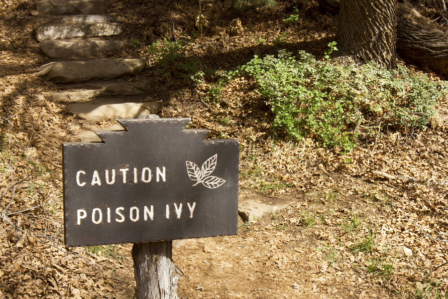 Home Care in Strongsville OH: How to Spot Poison Ivy