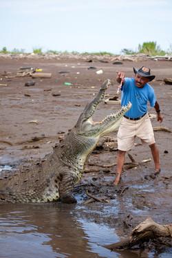 16' croc Jose