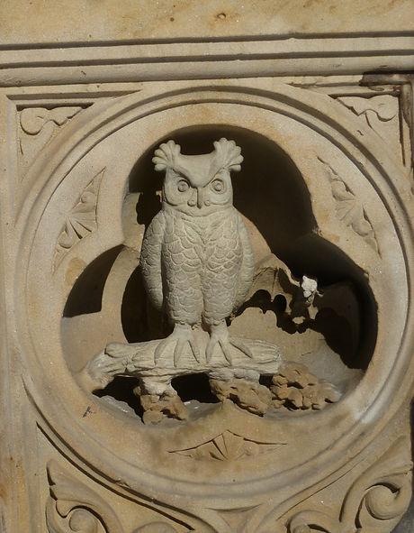 Central Park Owl.jpg