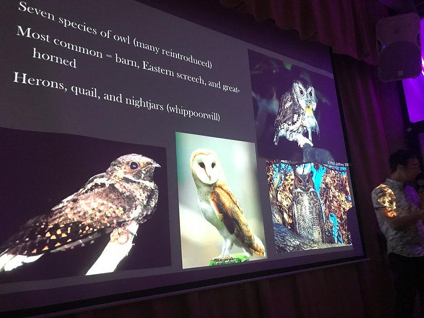 T&T owls.jpg