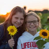 Heap Sunflower Harvest