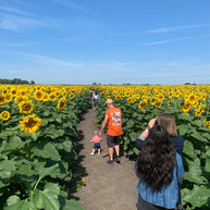 Heap family sunflowers