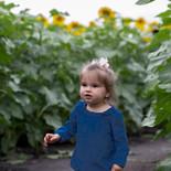 Heap's Sunflower Field