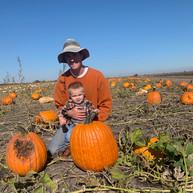 Heap family pumpkins