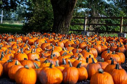Heap's pumpkins