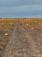 illinois pumpkin patch