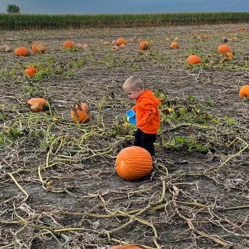 Heap pumpkin patch