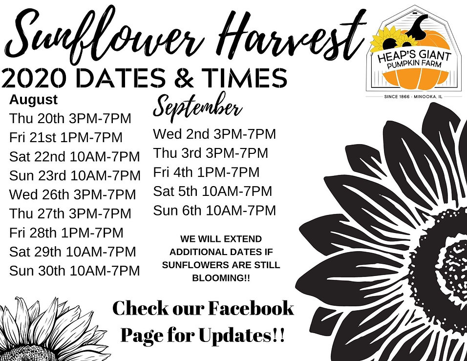 sunflower times and dates.jpg