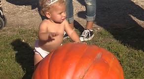 Pumpkin far birthday party