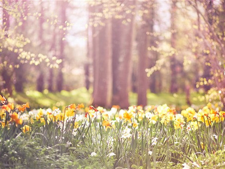 A Springtime Spring Event