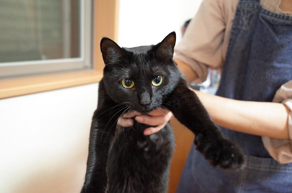 YUUTAROUの黒猫、お母さんに捕まえられるめろちゃん