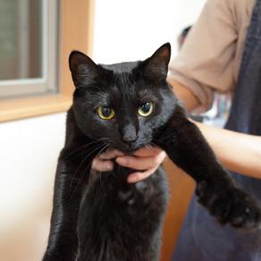 黒猫は撮るのが難しい