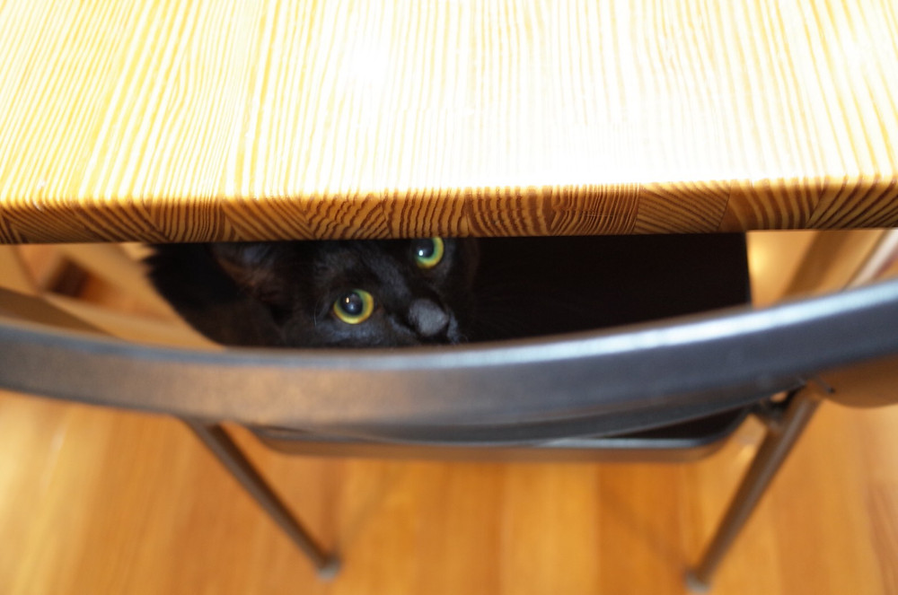 YUUTAROUの黒猫、警戒しまくりのめろちゃん