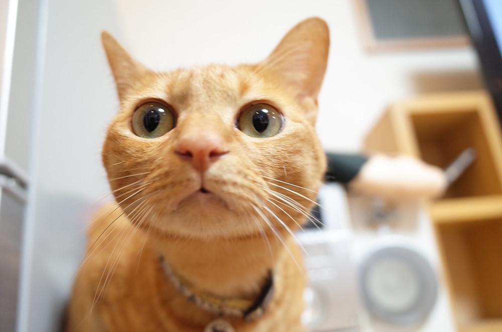 YUUTAROUの猫、むふぁさ