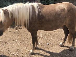 Skeeter Trickster Pony