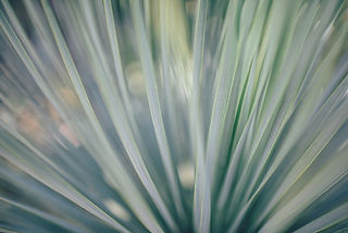 Lâminas de grama