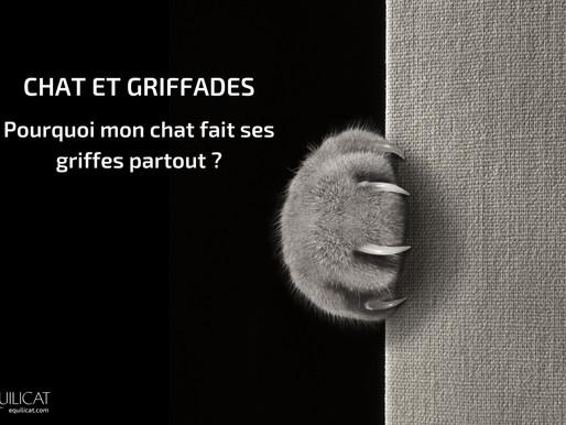 Chat et griffades : Pourquoi mon chat fait ses griffes partout !
