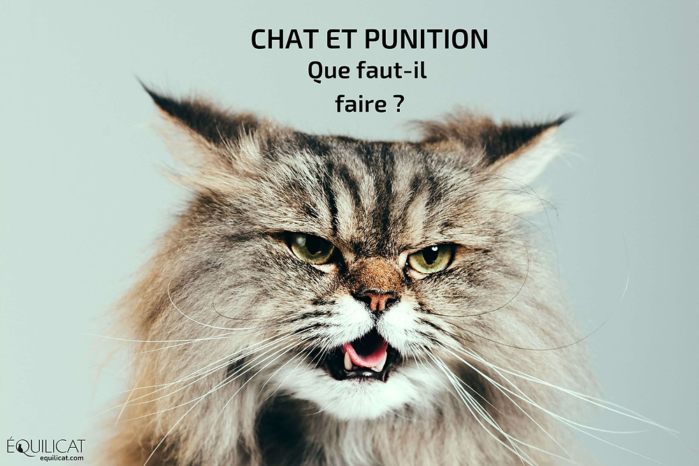 Chat et punition : non à la maltraitance