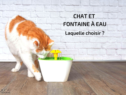 Fontaine à eau pour chat : laquelle choisir ?
