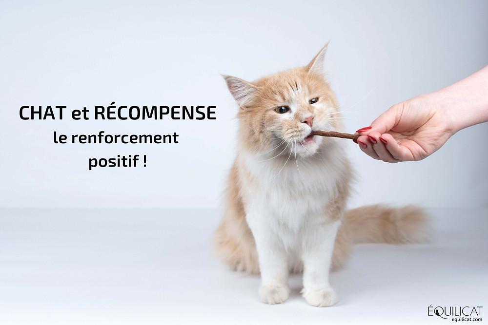 chat et éducation : les friandises et récompenses