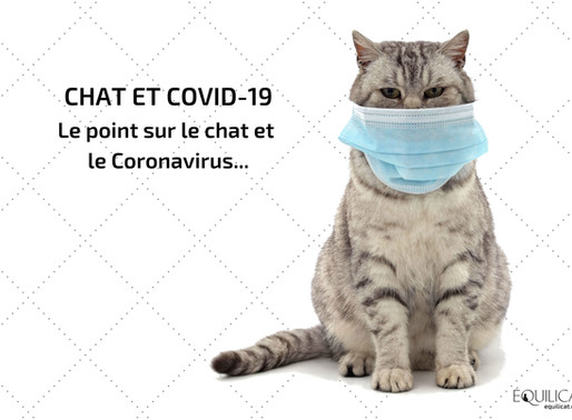 Chat et COVID-19 : le point sur le chat et le Coronavirus.