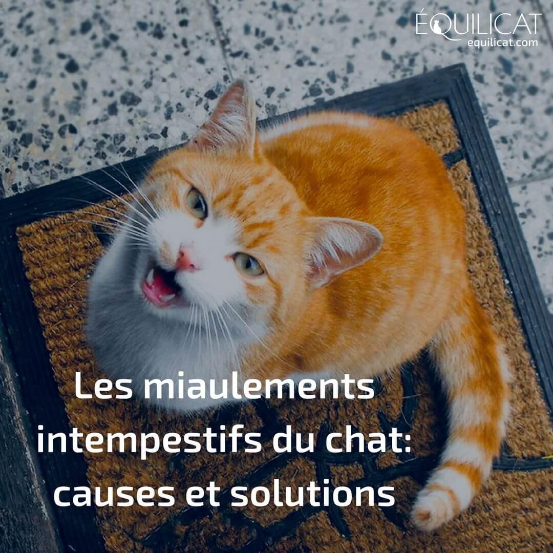 Stopper Les Miaulements Intempestifs De Votre Chat