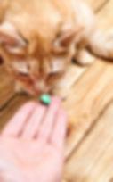 EquiliCat Chat Désensibilisation Médicament Vétérinaire