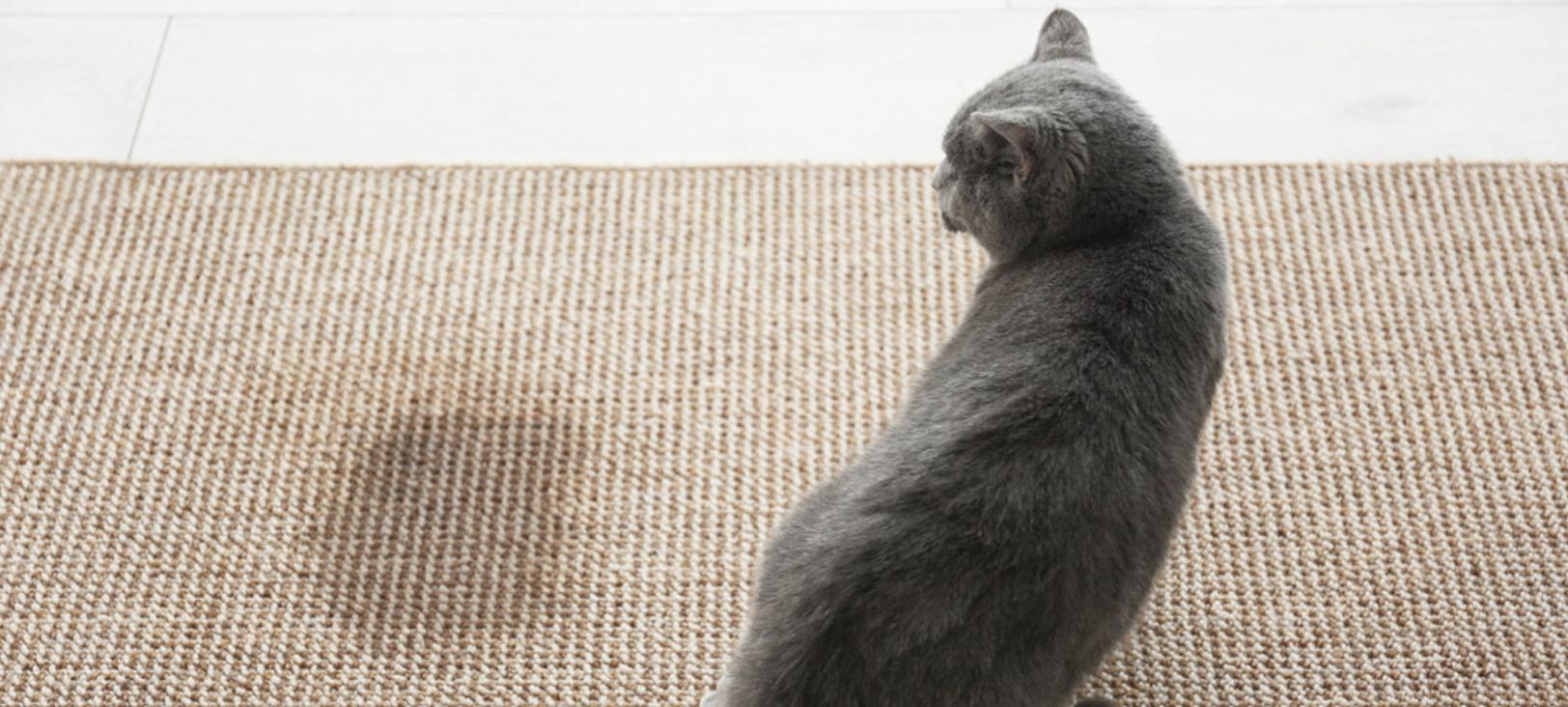 Comportementaliste, spécialiste du chat à Paris et île de France , Hugues Martinat résous les problèmes de comportement du chat:  pipi du chat, agressivité et la plupart des troubles du comportement félin.