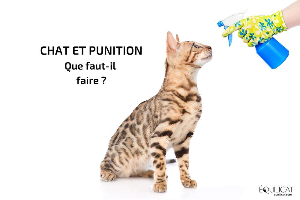 Chat et vaporisateur d'eau : la punition et le chat