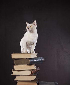 EquiliCat formation spécialisée chat tout public et professionnels