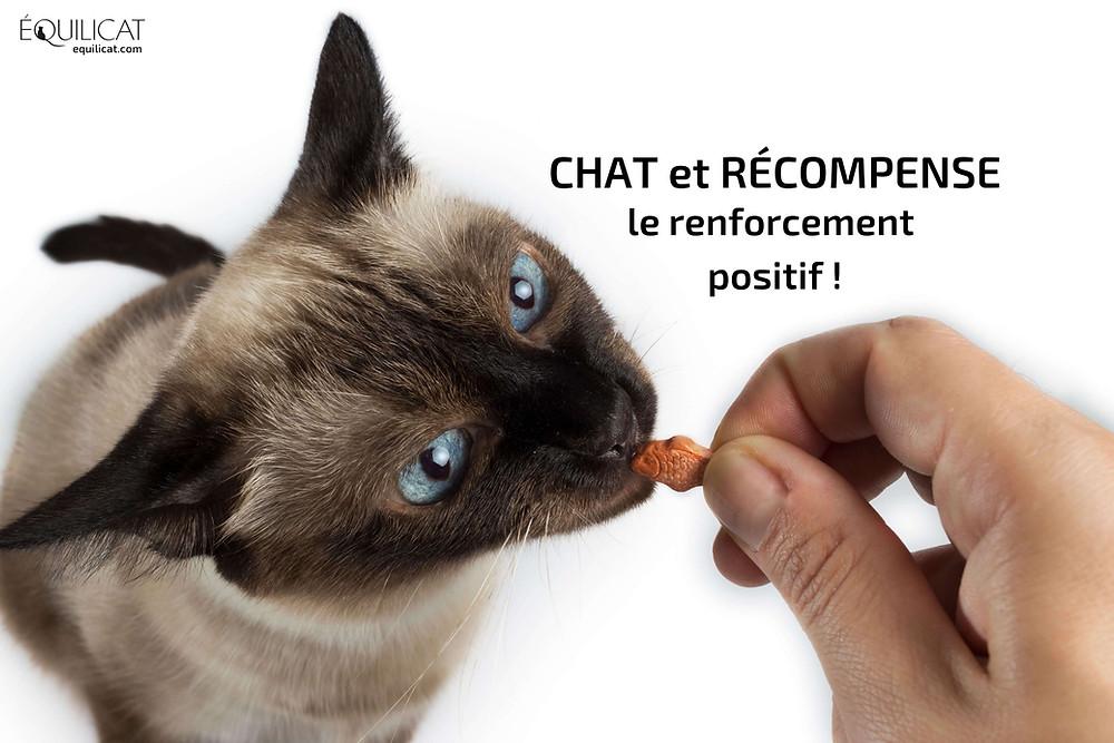 Chat et récompense : le renforcement positif