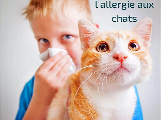 Comprendre l'allergie aux chats !